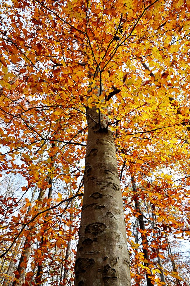 Fall-tree